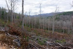 Lower Trace Ridge Logging Clearing