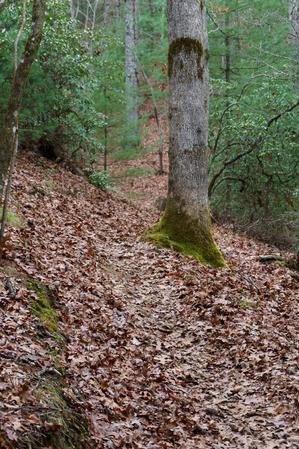 Lower Trace Ridge Trail Reroute