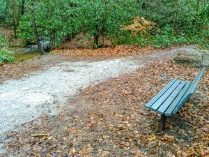 Resting Bench on the Toms Creek Falls Trail