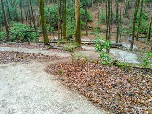 Loopy Trail at Toms Creek Falls