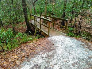 Bridge on the Toms Creek Falls Trail