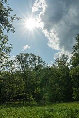 Stone Mountain State Park Meadow