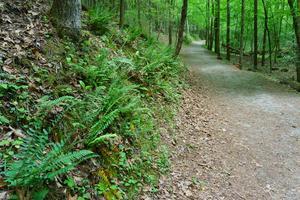Stone Mountain Loop Trail Lush Woods