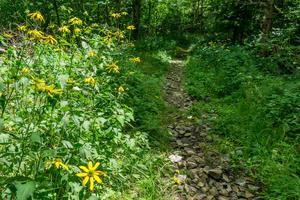 Buncombe Horse Range Trail Wildflowers
