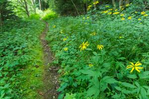 Wildflowers in Deep Forest