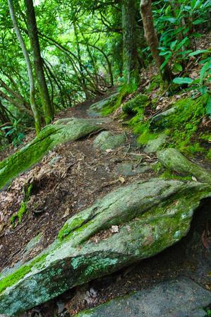 Mossy Rock on Upper Creek Falls Trail