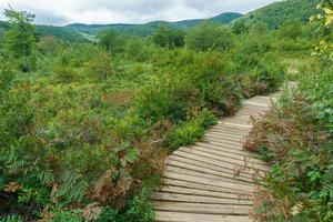 Boardwalk in Graveyard Fields