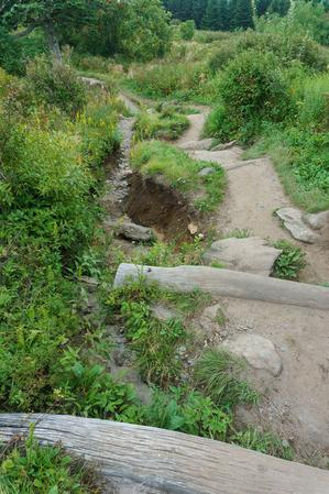 Erosion and Logs on the Art Loeb Trail