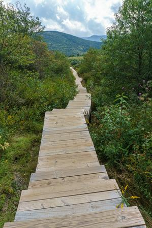 Boardwalk and Staircase on Sam Knob Summit Trail