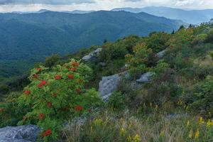 View from Sam Knob in Late Summer