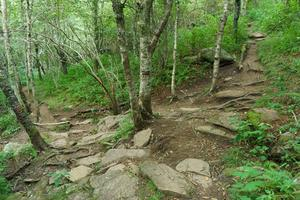 Sam Knob Trail Switchback