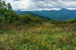 Shrubby Meadow on Sam Knob
