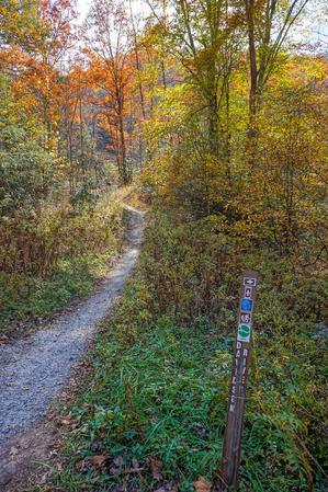 Start of the Davidson River Trail