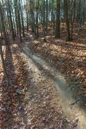 Hickory Mountain Loop Trail Curves