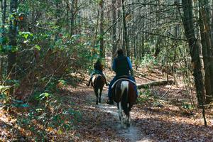 Horses on the Rifle Trail