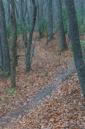 Chestnut Cove Trail Curves