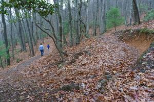 Chestnut Cove Trail Switchbacks