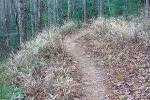 Grassy Road Trail Hill Cane