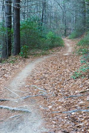 Grassy Road Trail Fast Section