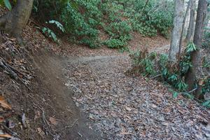 Sycamore Cove Trail Banked Curve