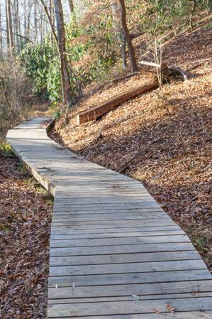 Boardwalk on the Sycamore Cove Trail