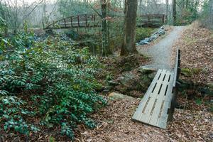 Unofficial Trail beside Davidson River