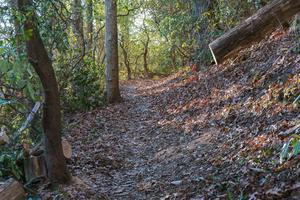 Sycamore Cove Trail Maintenance