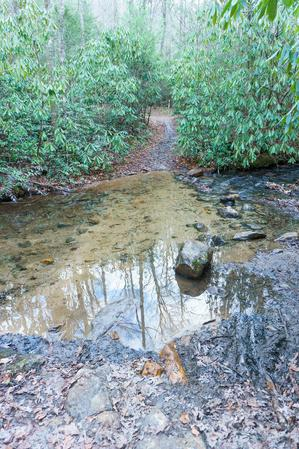 Fletcher Creek Trail Creek Crossing