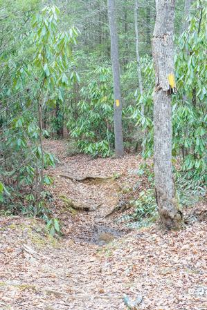 Spencer Branch from Fletcher Creek