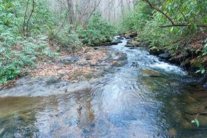 Fletcher Creek