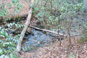 Old Log Bridge Location on Spencer Branch