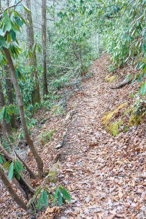 Bottom of Spencer Branch Trail