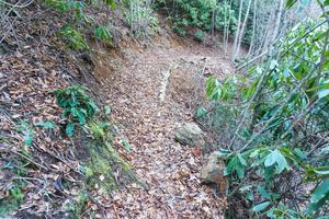 Spencer Branch Trail Slopeside