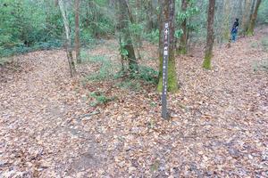Spencer Branch at Midle Fork Junction