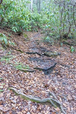 Wet Spot on Spencer Branch