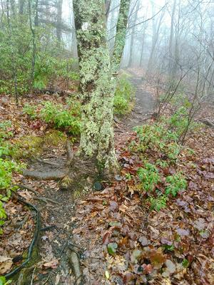 Foggy Sretch of the Mountains to Sea Trail