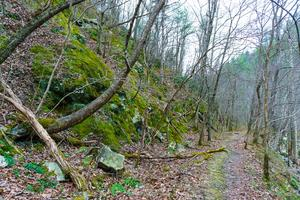 Rocky Slopes above the Laurel River Trail