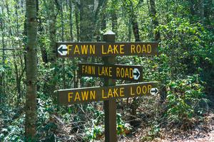Fawn Lake Loop and Road
