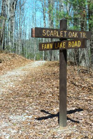 Scarlet Oak & Fawn Lake Road Junction