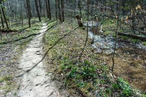 The Coontree Loop Trail and Creek
