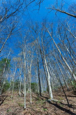 Early Spring Forest on the Coontree Loop Trail