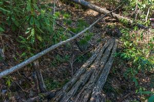 Bridge of Small Logs on the Coontree Loop Trail