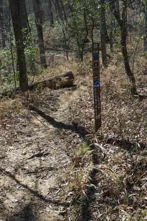 Coontree Loop Trail Sign at Bennett Gap