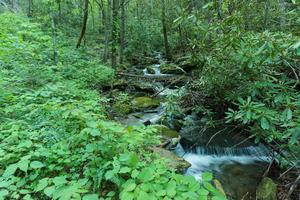 Slick Falls Branch