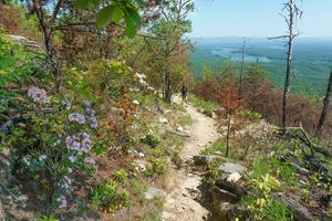 Mountain Laurel and Views on Shortoff Mountain