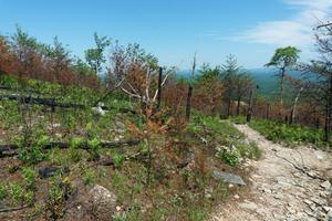 Burned Area on Shortoff Mountain