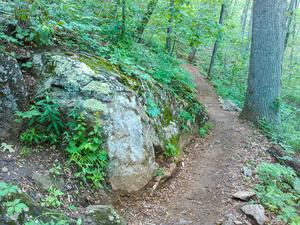 Mountains to Sea Trail Rock and Tree