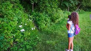 Start of the Green Knob Trail
