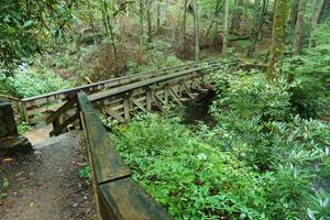 Bridge over Little Santeetlah Creek