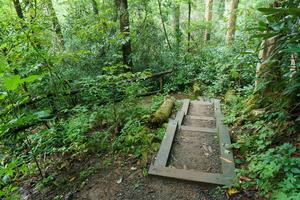Steps on the Joyce Kilmer Memorial Loop Trail